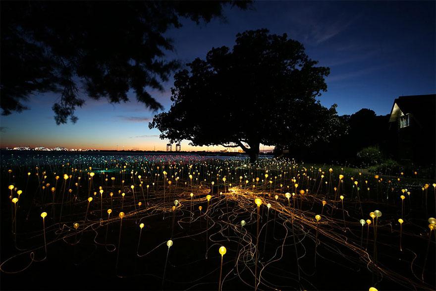 Dùng 50.000 đèn led thắp sáng vùng quê hẻo lánh thành sa mạc huyền diệu - Ảnh 5