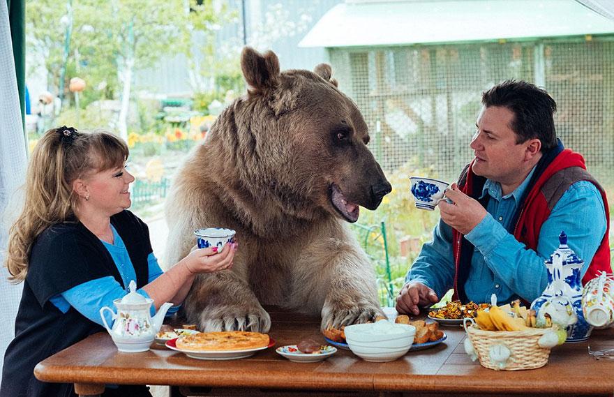 Ngạc nhiên cặp vợ chồng suốt 23 năm… sống chung với gấu - Ảnh 1