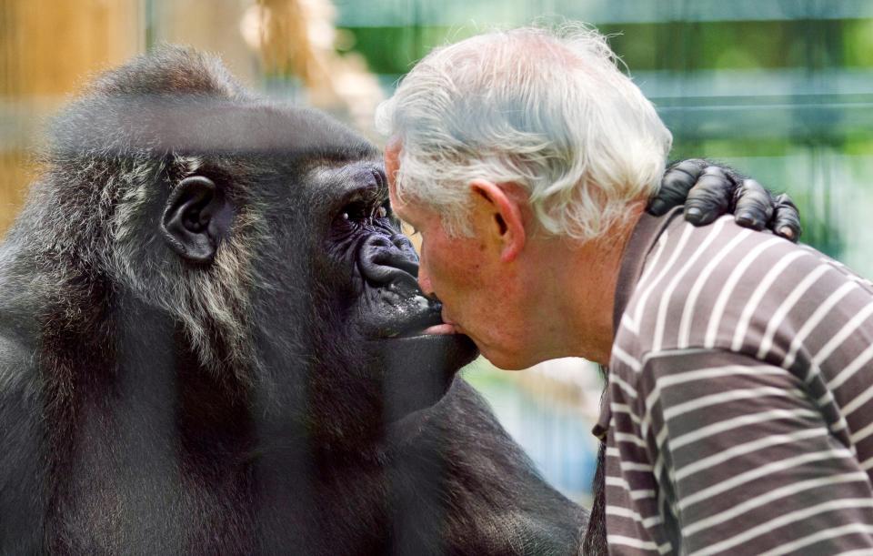 Cặp vợ chồng sống chung với khỉ đột suốt 18 năm - Ảnh 3