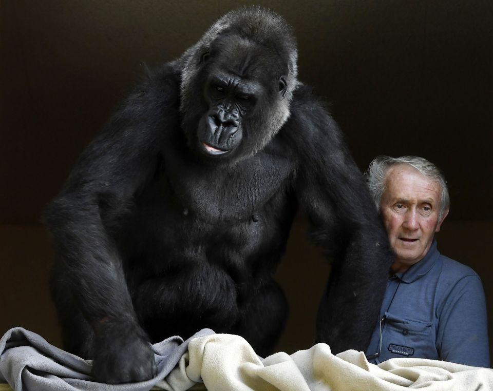 Cặp vợ chồng sống chung với khỉ đột suốt 18 năm - Ảnh 4