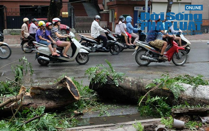 Hà Nội: Thót tim 50 người cứu nạn nhân bị cây cổ thụ đè - Ảnh 1
