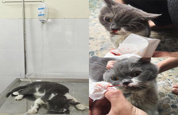 Nghi án vụ đánh bả mèo hàng loạt tại quán cafe chỉ là trò dối trá - Ảnh 1