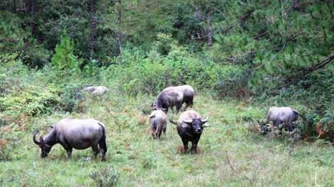 Xây dựng Công viên bảo tồn động vật hoang dã Tây Nguyên - Ảnh 1