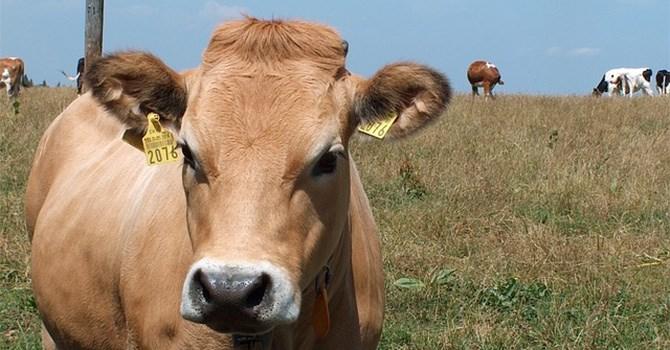 FLC và Vingroup đồng loạt đầu tư vào nông nghiệp Thanh Hóa - Ảnh 1