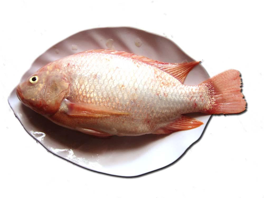Cách làm món cá diêu hồng sốt ngũ sắc