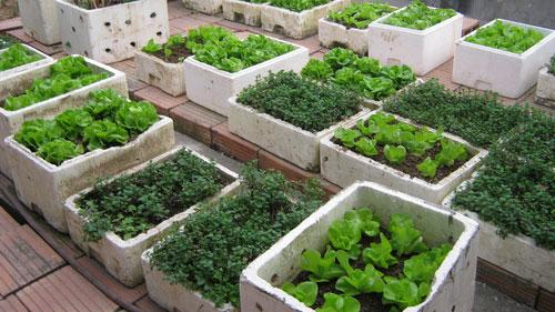Cảnh báo nguy cơ rau tự trồng nhiễm độc - Ảnh 1