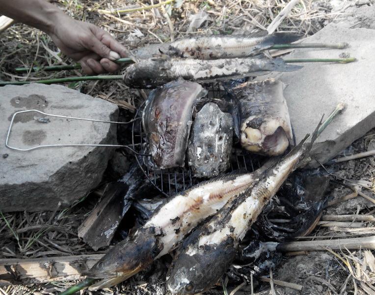 Hai trẻ tử vong sau khi ăn cá lóc nướng tại tỉnh Đồng Tháp - Ảnh 1