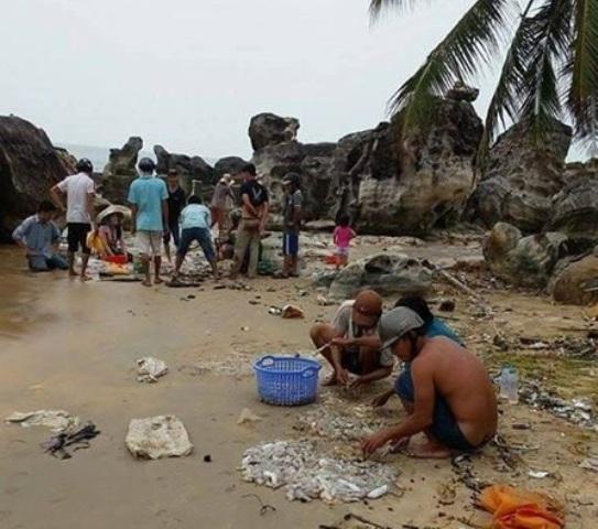 """Hàng ngàn hải sâm trôi dạt vào bờ biển: Cẩn thận với """"lộc trời""""? - Ảnh 1"""