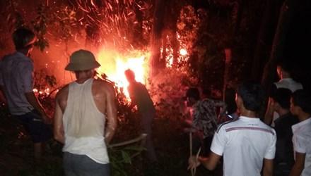Cháy rừng thông, hàng trăm người dập lửa tại Hà Tĩnh - Ảnh 1