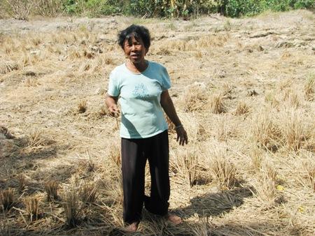 Hạn mặn ngày càng khốc liệt, 5 triệu người ở ĐBSCL bị ảnh hưởng - Ảnh 2