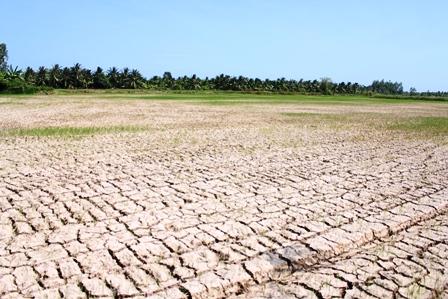 Hạn mặn ngày càng khốc liệt, 5 triệu người ở ĐBSCL bị ảnh hưởng - Ảnh 1