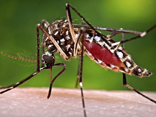 Công bố 200 mẫu bệnh phẩm xét nghiệm virus Zika trên toàn quốc  - Ảnh 1