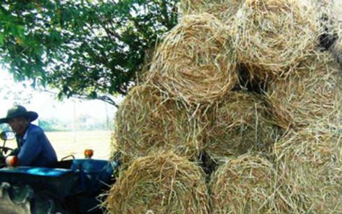 Lão nông thu 10 triệu mỗi ngày nhờ máy thu gom rơm tự chế - Ảnh 1