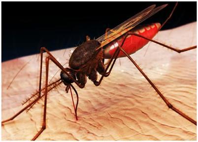 Xuất hiện muỗi kháng hóa chất, có nguy cơ lan rộng tại Việt Nam - Ảnh 1