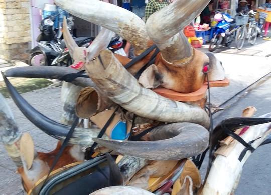 """Sừng linh dương """"lộng hành"""" trên phố tại Đồng bằng sông Cửu Long - Ảnh 1"""