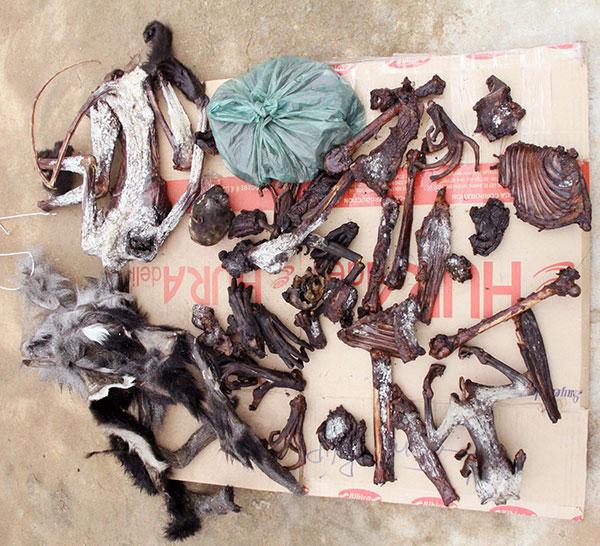 Lâm Đồng: Liên tiếp phát hiện voọc chà vá chân đen bị giết hại  - Ảnh 3