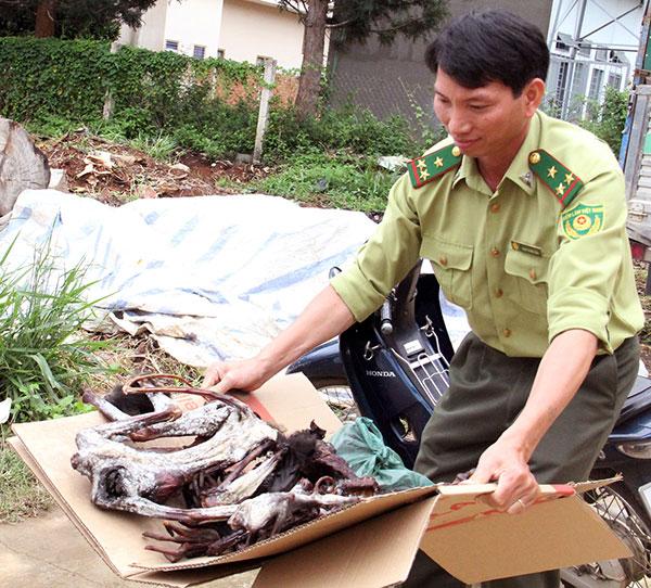 Lâm Đồng: Liên tiếp phát hiện voọc chà vá chân đen bị giết hại  - Ảnh 1