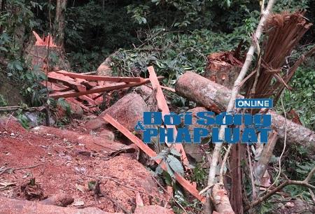 Bắt quả tang nhóm lâm tặc phá rừng đặc dụng Cha Lo - Ảnh 1