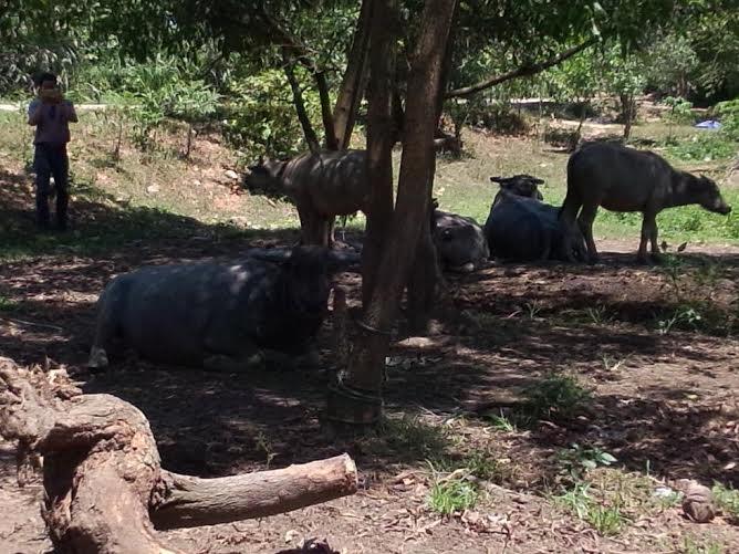 TT-Huế: Dự án giáo dục xây trường học để chăn thả trâu bò - Ảnh 6