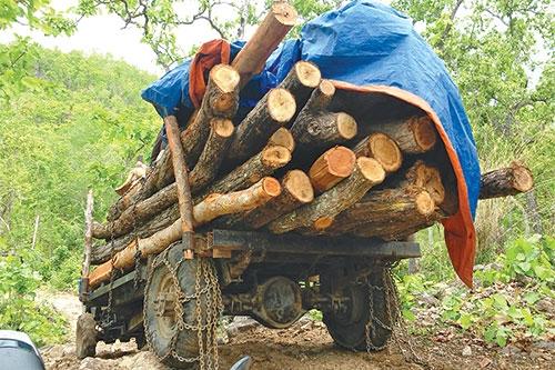 Mật phục những kẻ mang cả công nông đi phá rừng ở Tây Nguyên - Ảnh 1