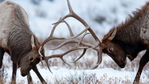 Rùng mình trước những trận 'quyết chiến' trong thế giới động vật - Ảnh 1