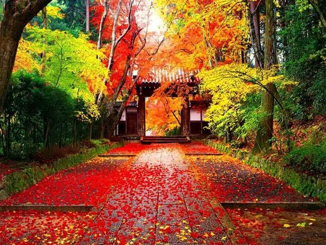 Đi du lịch Nhật Bản vào thời điểm nào là thích hợp nhất? - Ảnh 1