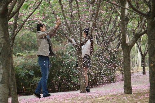 """Phẫn nộ chàng trai rung cây cho hoa anh đào rụng để bạn gái thoải mái """"tự sướng"""" - Ảnh 4"""