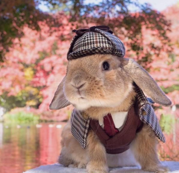 Chú thỏ sành điệu và sang chảnh nhất thế giới! - Ảnh 2