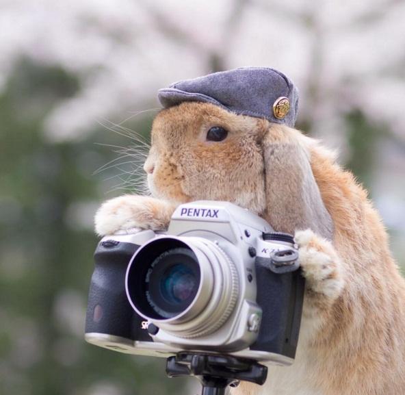 Chú thỏ sành điệu và sang chảnh nhất thế giới! - Ảnh 3