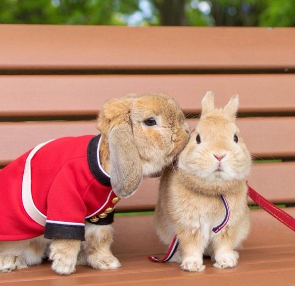 Chú thỏ sành điệu và sang chảnh nhất thế giới! - Ảnh 5