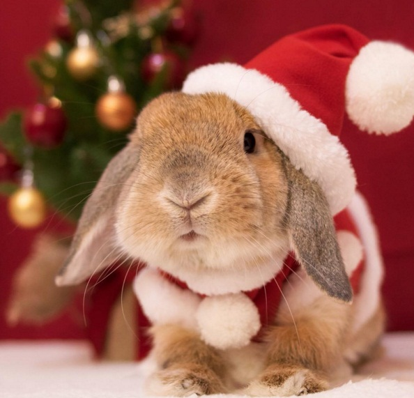 Chú thỏ sành điệu và sang chảnh nhất thế giới! - Ảnh 7