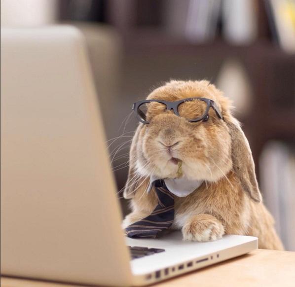 Chú thỏ sành điệu và sang chảnh nhất thế giới! - Ảnh 1