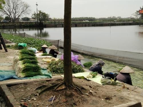 """Phát hiện bất ngờ của bạn đọc về việc """"tắm rau"""" bằng nước ô nhiễm ở Hưng Yên - Ảnh 2"""