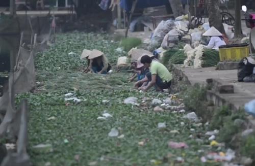 """Phát hiện bất ngờ của bạn đọc về việc """"tắm rau"""" bằng nước ô nhiễm ở Hưng Yên - Ảnh 1"""