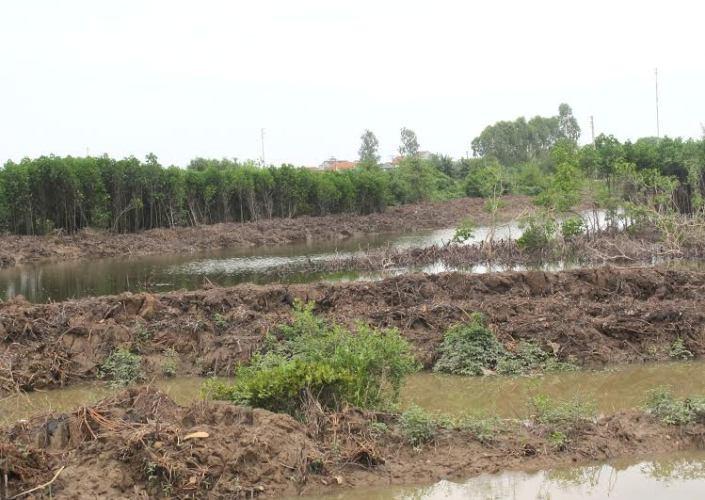 Nghệ An: Báo động tình trạng xâm lấn đất rừng phòng hộ - Ảnh 1