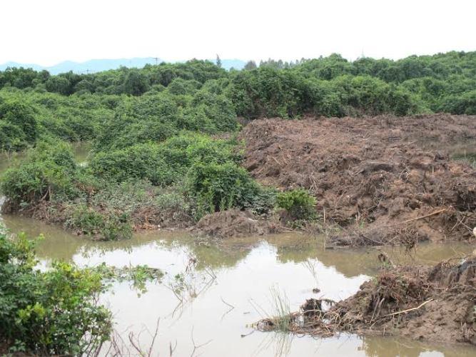 Nghệ An: Báo động tình trạng xâm lấn đất rừng phòng hộ - Ảnh 2
