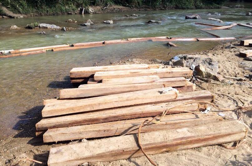 Nghệ An: Lâm tặc rải hàng trăm súc gỗ pơ mu lớn dọc suối - Ảnh 1