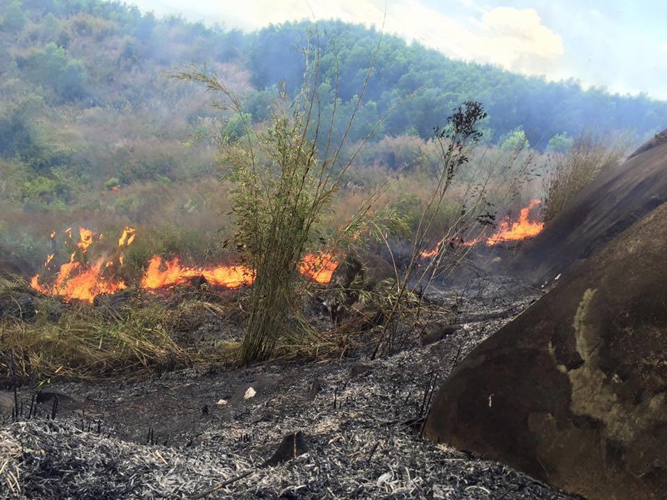Nghệ An: Cháy suốt  3 ngày, hàng chục ha rừng bị thiêu rụi - Ảnh 1