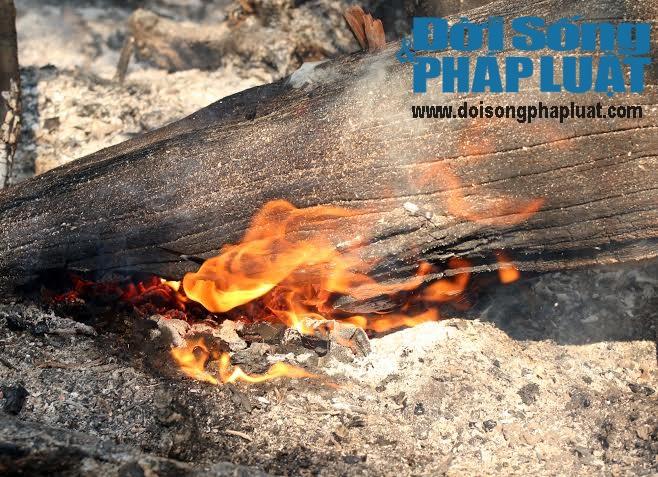 Toàn cảnh vụ cháy rừng suốt 5 ngày tại Nghệ An - Ảnh 6