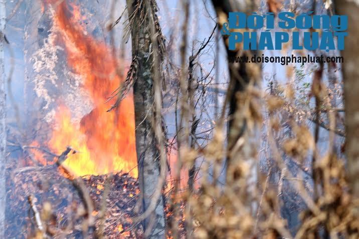 Toàn cảnh vụ cháy rừng suốt 5 ngày tại Nghệ An - Ảnh 3