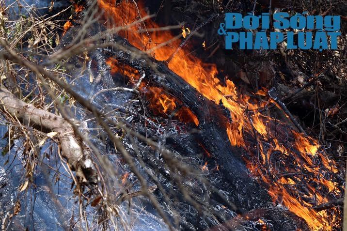 Toàn cảnh vụ cháy rừng suốt 5 ngày tại Nghệ An - Ảnh 4