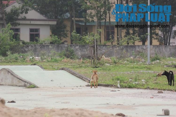 Nghệ An: Dự án trọng điểm phố núi 6 năm lát xong gạch vỉa hè - Ảnh 5