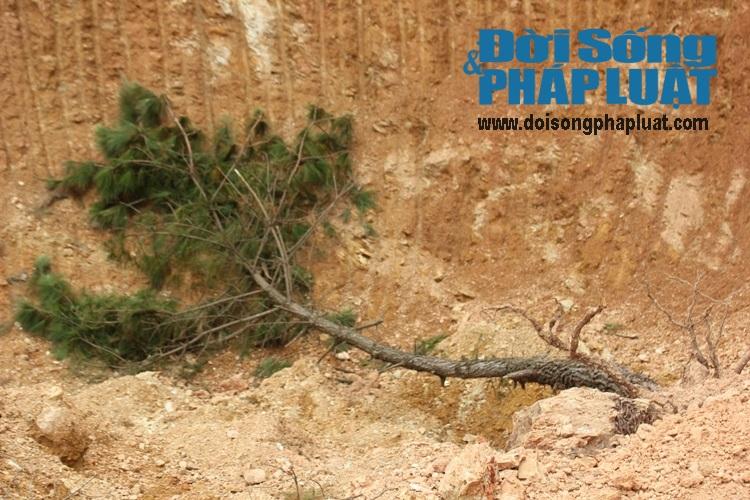 Nghệ An: Rừng núi bị xẻ thịt tan hoang cạnh QL48 - Ảnh 2