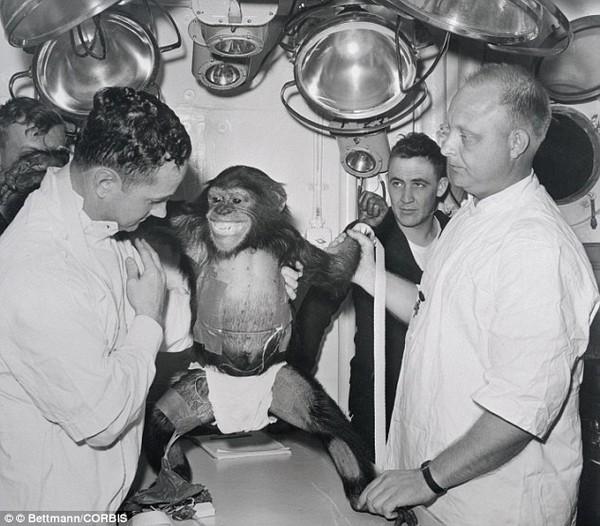 """Chuẩn bị """"xuất chuồng"""" những chú khỉ thám hiểm sao Hỏa đầu tiên  - Ảnh 5"""