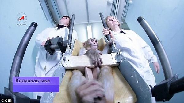 """Chuẩn bị """"xuất chuồng"""" những chú khỉ thám hiểm sao Hỏa đầu tiên  - Ảnh 4"""
