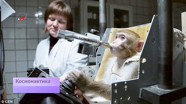"""Chuẩn bị """"xuất chuồng"""" những chú khỉ thám hiểm sao Hỏa đầu tiên  - Ảnh 2"""