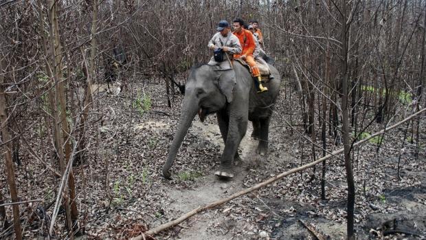 """Indonesia huấn luyện voi thành """"lính cứu hỏa"""" - Ảnh 2"""
