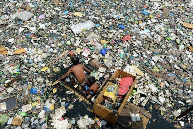 """Giun - """"vũ khí"""" mới chống lại rác thải nhựa - Ảnh 2"""