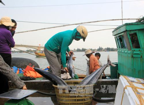 Việt Nam luôn tôn trọng các quyền và tự do cơ bản  - Ảnh 1