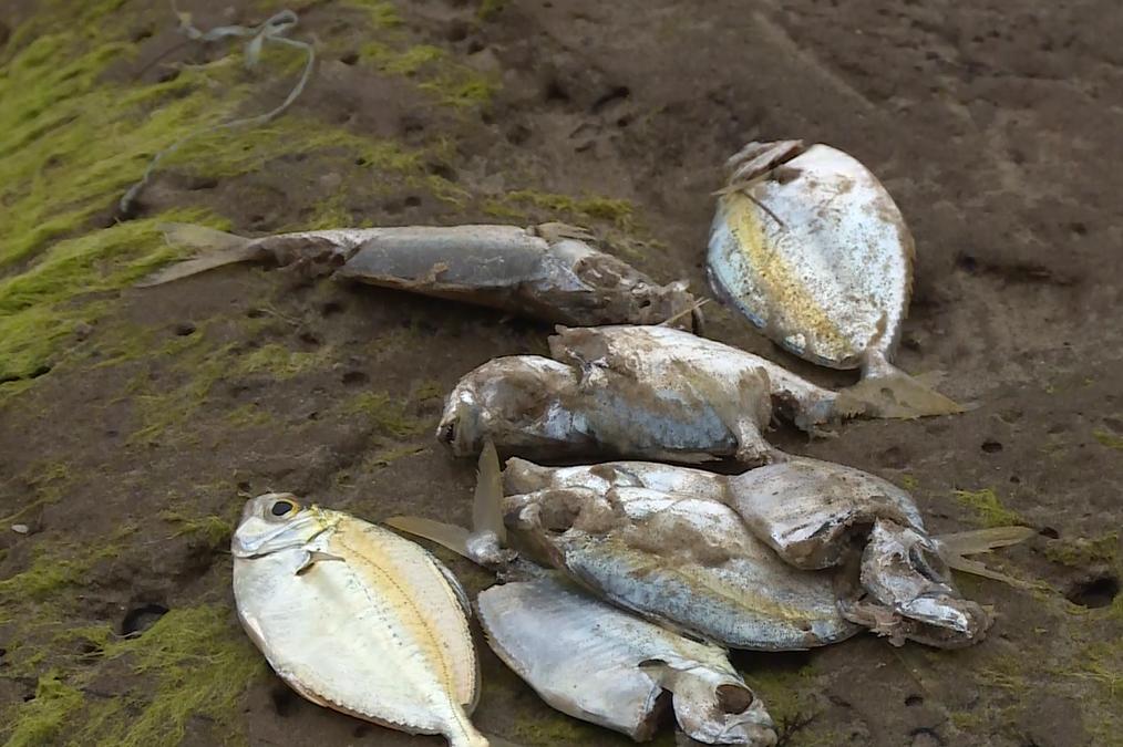 Điều tra nguyên nhân cá chết hàng loạt ở ven biển miền Trung - Ảnh 4